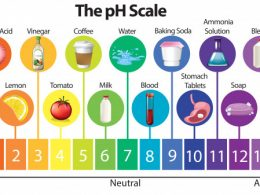 Alkaline Diet Plan ( Indian PH Balance Diet chart )