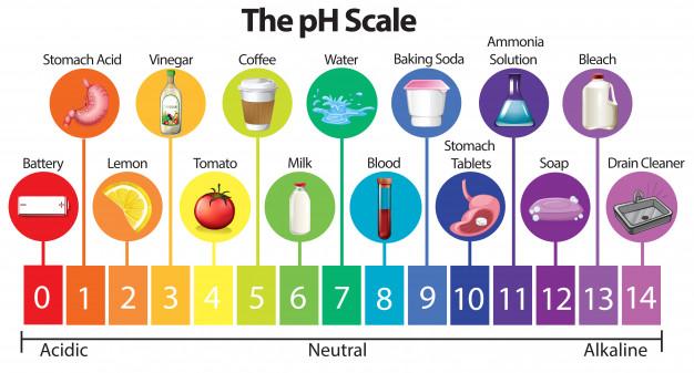 Alkaline Diet Plan ( Indian PH Balance Diet chart )