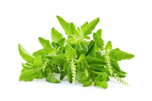 ndian Foods To Boost Immunity