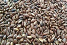 Benefits of Flax seeds ( Alasi / Linseeds ) on Weight loss, Health, Skin and Hair
