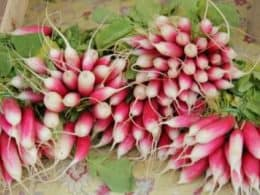 health benefits of radish health benefit of mooli
