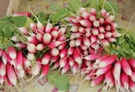 Top 12 Health Benefits Of Radish ( Mooli )
